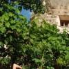 Peri Cave Hotel & Pension